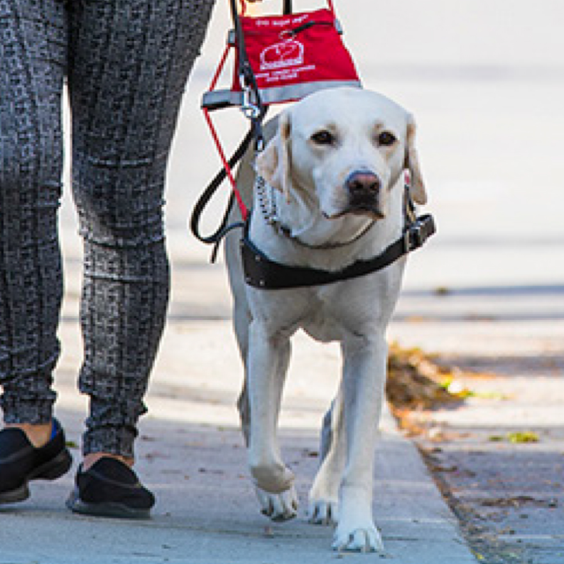 Walk for Dog Guides